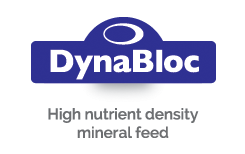 DynaBloc - High nutrient density mineral feed